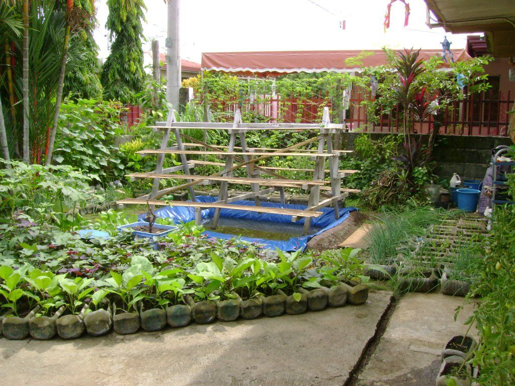 Small Yard Container Gardening To Be Multiplied For All The Hungry And Malnourished Jojo Rom Willem Van Cotthem Small Garden Plans Home Vegetable Garden Design Vegetable Garden Planning Backyard vegetable garden ideas philippines