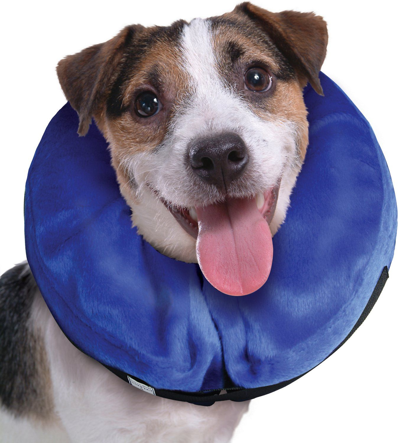 Alternative to the dreaded cone . . . from Chewy Cat pet