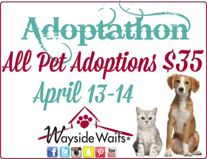 Pin by iPetsKC on Pet Events in Kansas City Waif, Pet