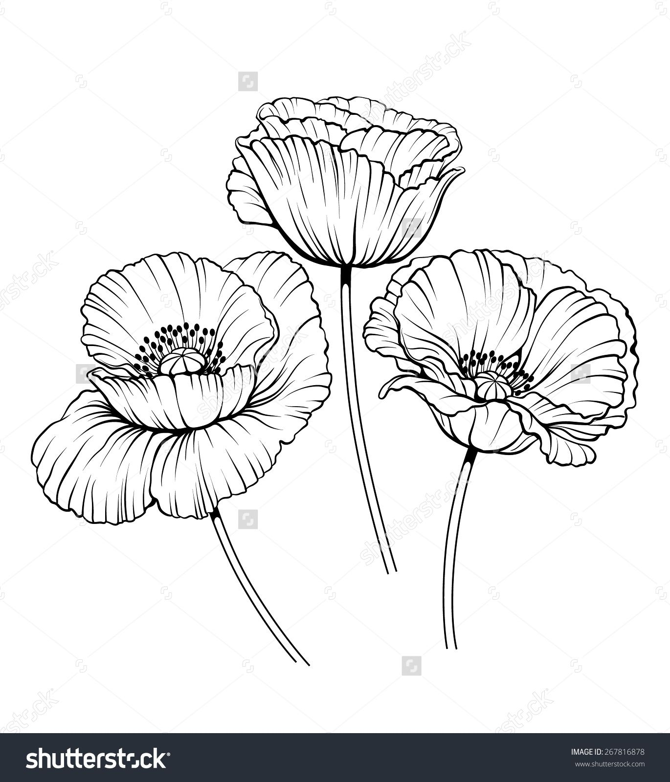 Poppy Line Drawing Tattoo : Stock vector black and white illustration of a poppy