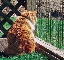 Give your #cats space to roam with TONS of inspiration for #catios! via @pawswa