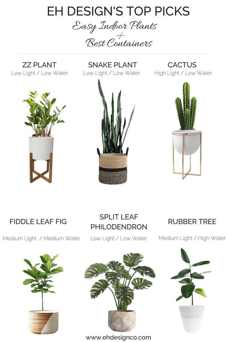 medium light indoor plants