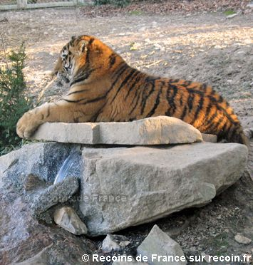 zoo de mulhouse zoo de mulhouse pinterest animaux et le zoo. Black Bedroom Furniture Sets. Home Design Ideas