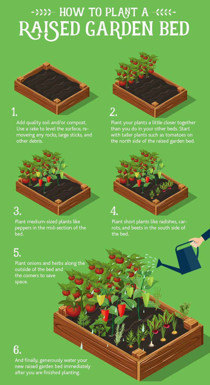Raised Garden Beds 101: The Basics + Helpful Tips
