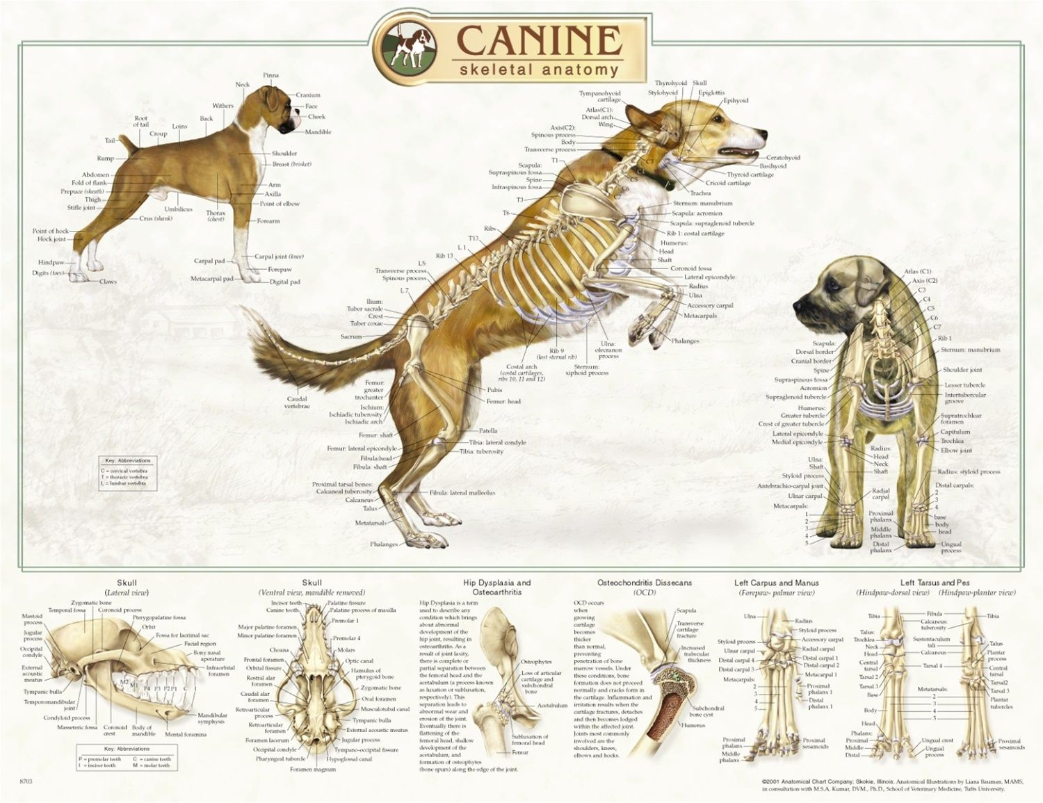 Pin de Andrea Marongiu en ANIMAL ANATOMY and other creatures ...