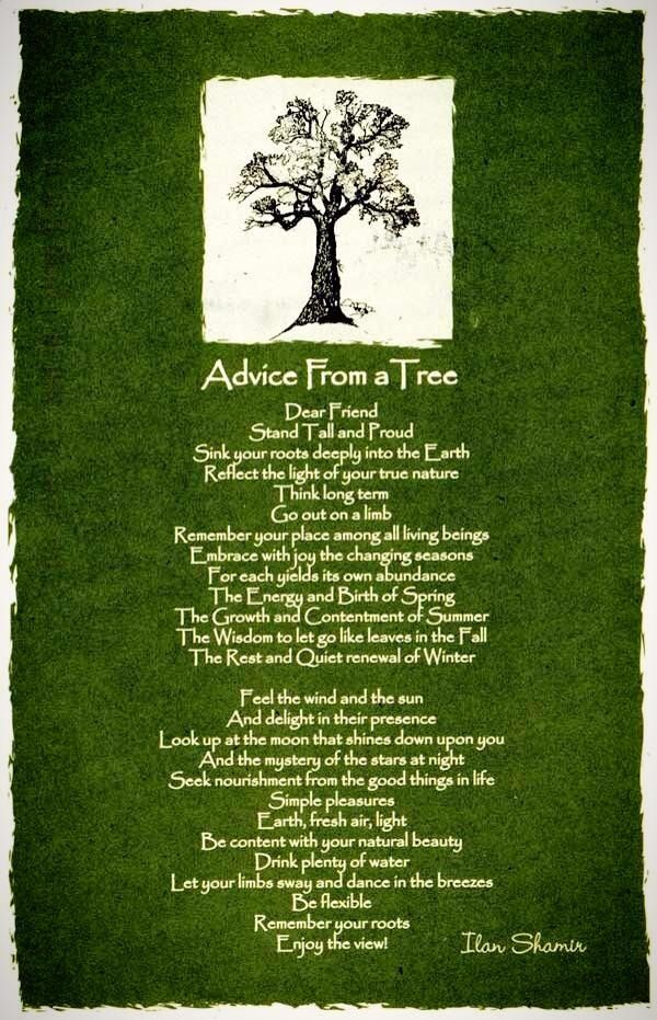 Treasuring Every Moment Of Life...: Advice From A Tree