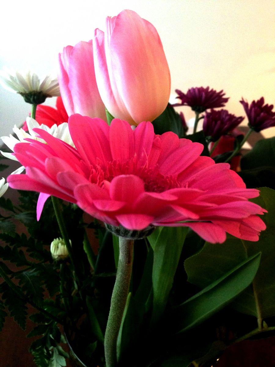 Gerbera Lasst Den Kopf Nicht Mehr Hangen Frag Mutti Blumenarrangements Gerbera Seidenblumengestecke