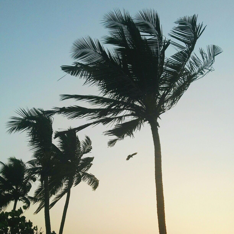 Bandra Plam Trees