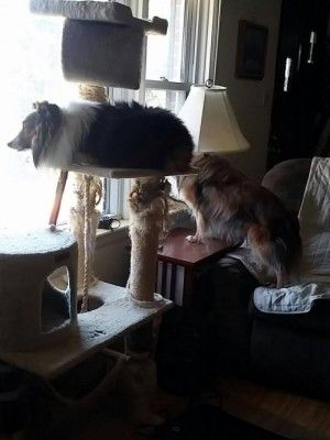 Sitting on the Cat Perch