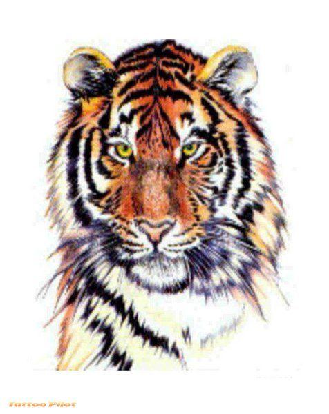 tiger tattoos tiger tattoo vorlagen my next tattoo. Black Bedroom Furniture Sets. Home Design Ideas