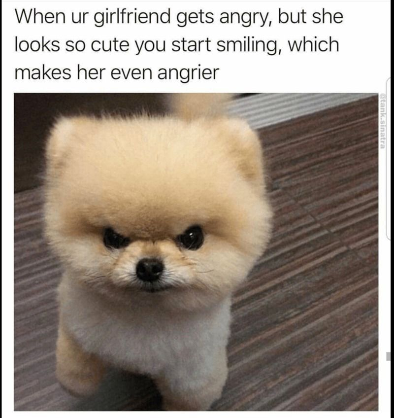 23 Hilarious Animal Memes So Cute They Ll Make You Lol Funny Animals Daily Lol Pics Funny Animal Jokes Cute Baby Animals Cute Funny Animals