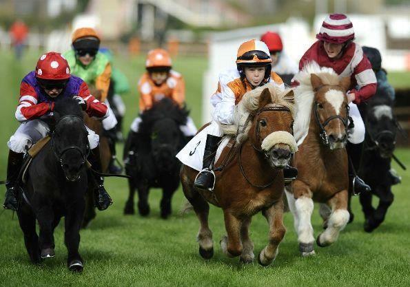 This is just so cute! Little jockeys racing miniature horses!