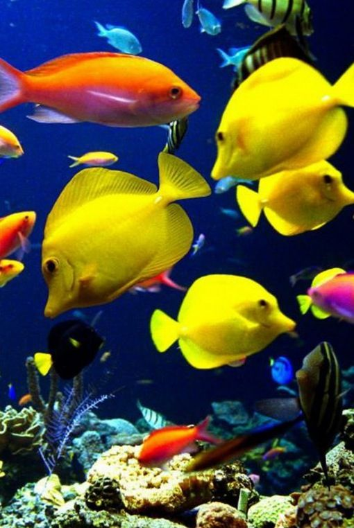 Very Happy Looking Pink Fish Water Animals Sea Animals Colorful Fish
