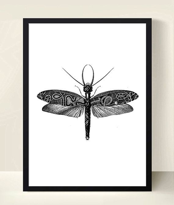 Set of 3 black and white poster insect poster digital download art collage black and white prints 3 insects decorate my walls pinterest white