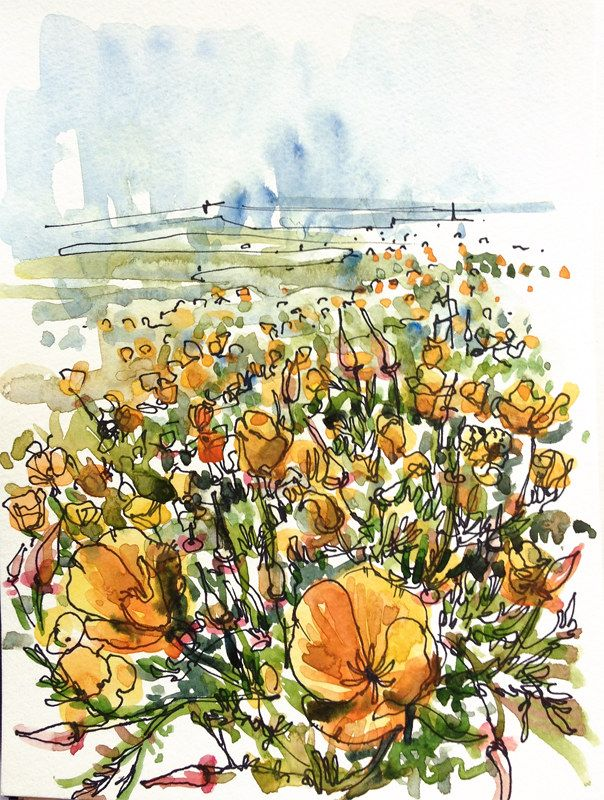 California Poppies, Guadalupe Park, San Jose in 2020 ...