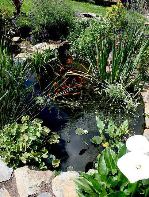My Garden Pond 1 Ponds Backyard Pond Plants Pond Water Features