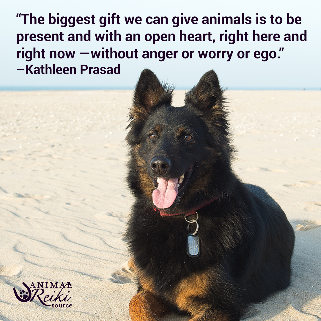 The Biggest Gift We Can Give Animals Is To Be Present And With An Open Heart Right Here And Right Now Without Anger Animal Reiki Reiki Healer Learn Reiki