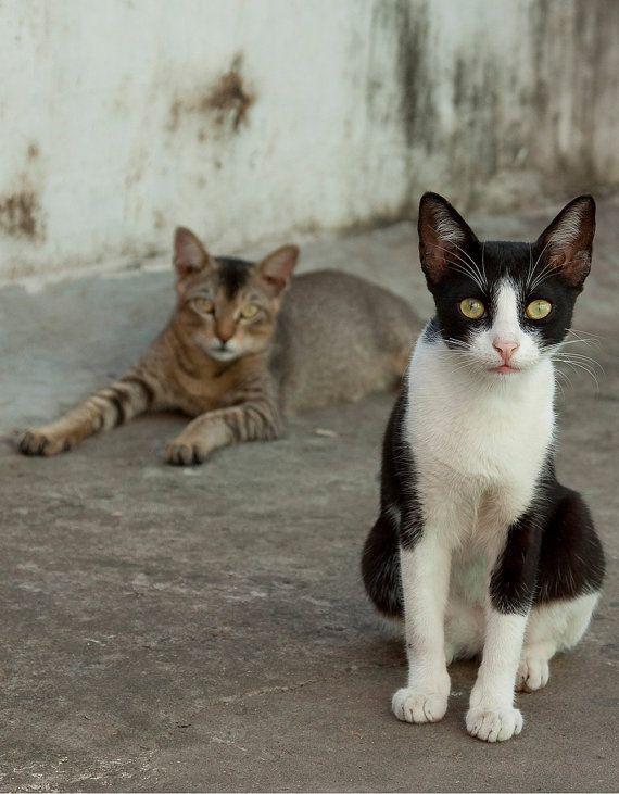 Street Cats India Kerala Two Cats Original Colour Photo Print 9 Quot X 7 Quot Cats Curious Cat Kerala