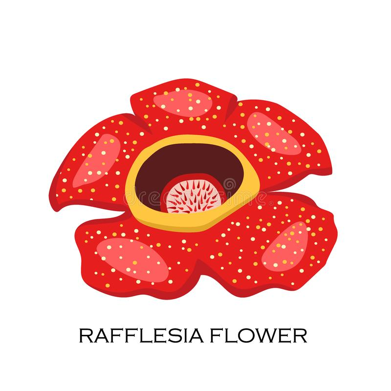 Rafflesia Stock Illustrations 55 in 2020