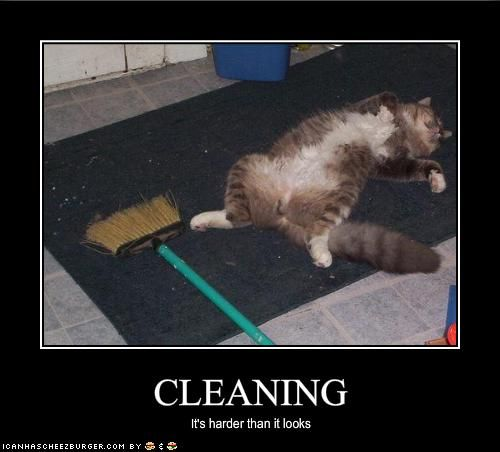 Cleaning It S Harder Than It Looks Carpet Cleaning Pet