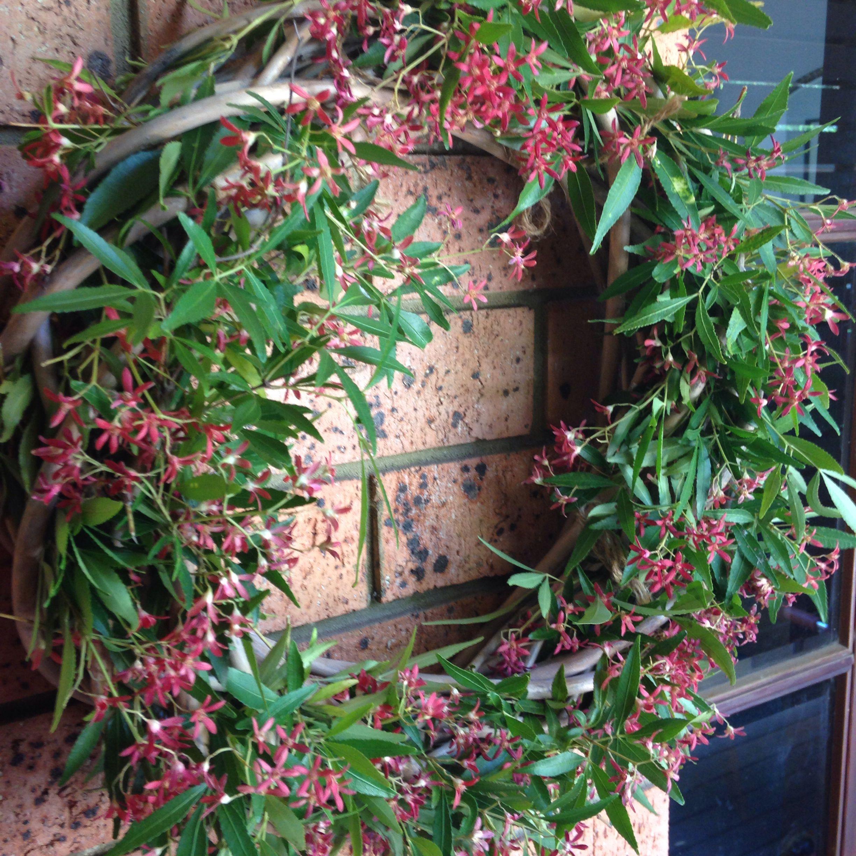 Australian christmas bush wreath | Christmas decorations ...