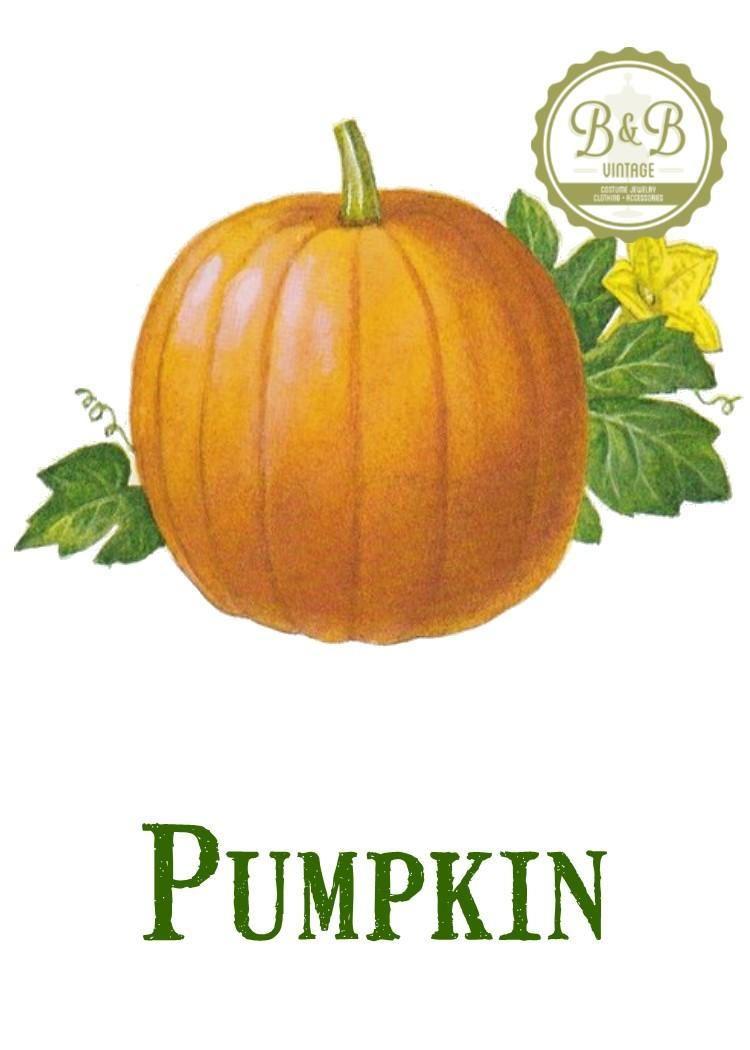 vintage pumpkin print digital download jpeg of vintage pumpkins plant and botanical images - Pumpkin Pictures To Print