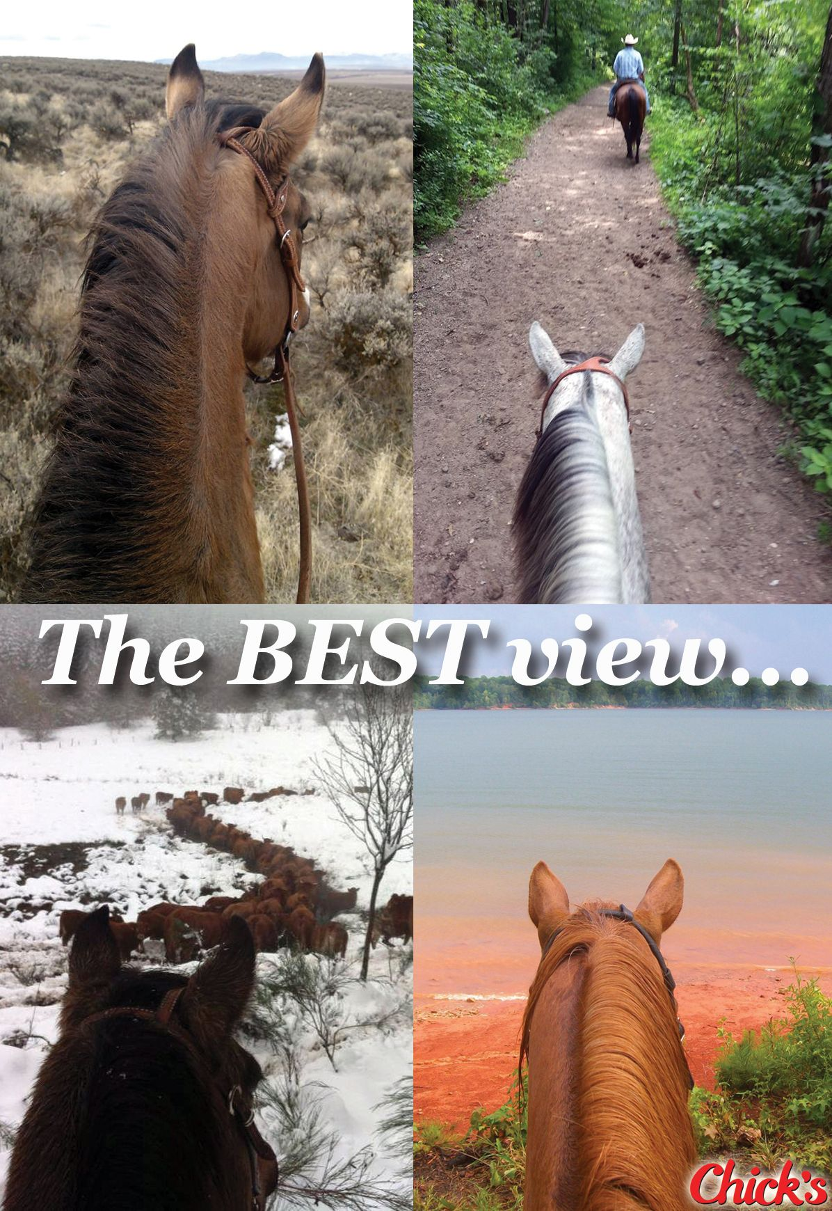 "the world is best viewed through the ears of a horse."" - repin if"