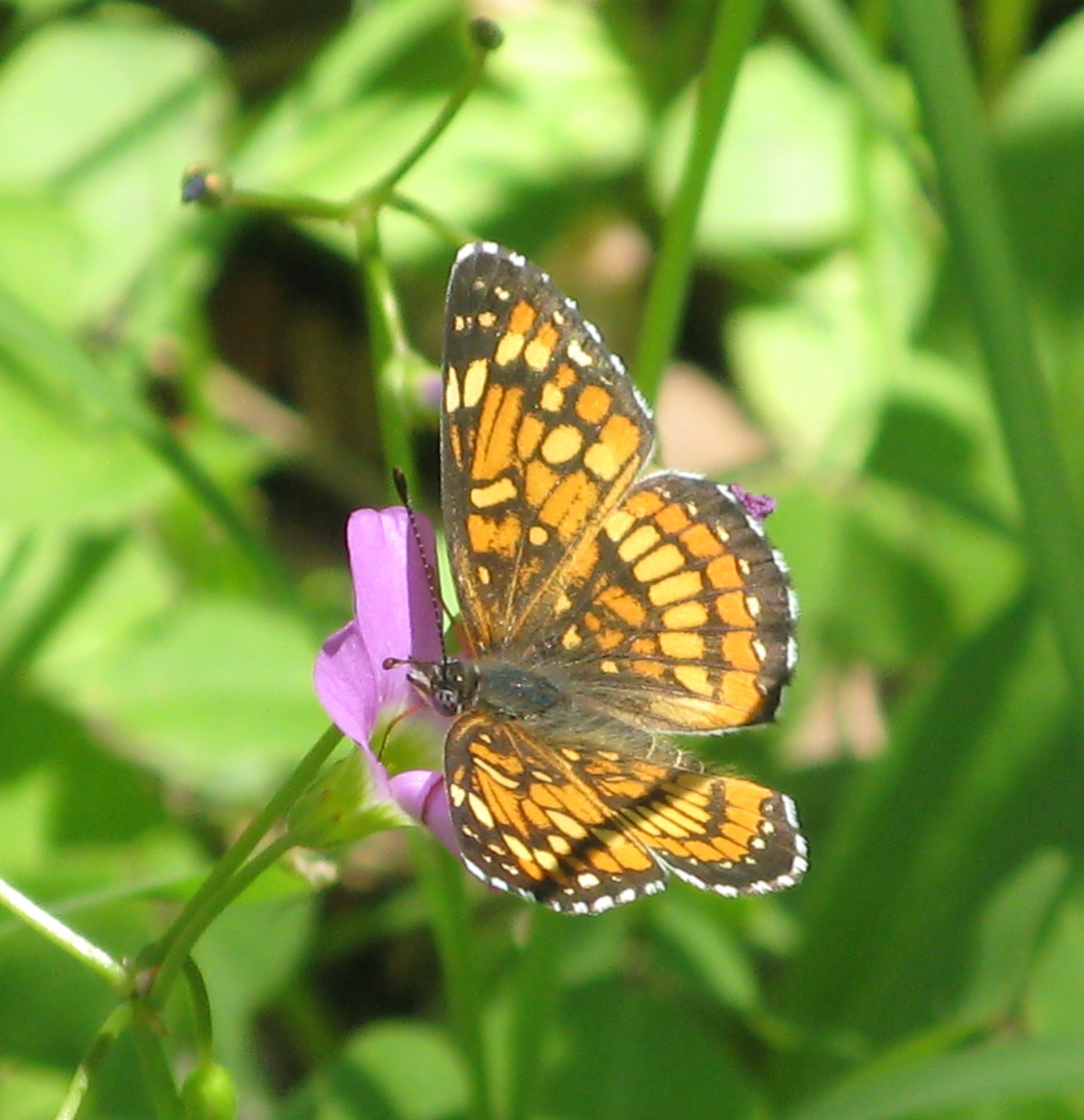 Butterfly In Garden Canyon
