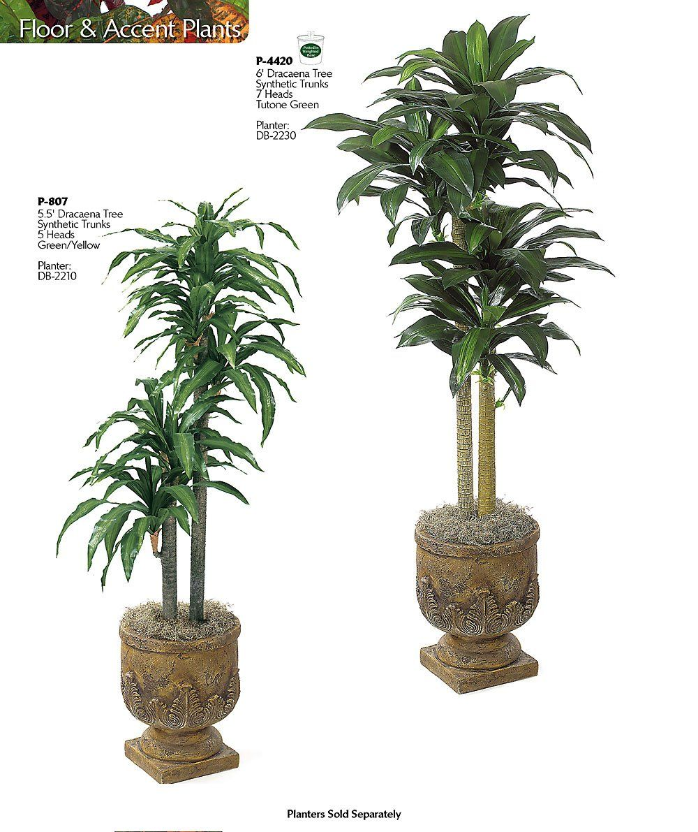 indoor plants with names google search