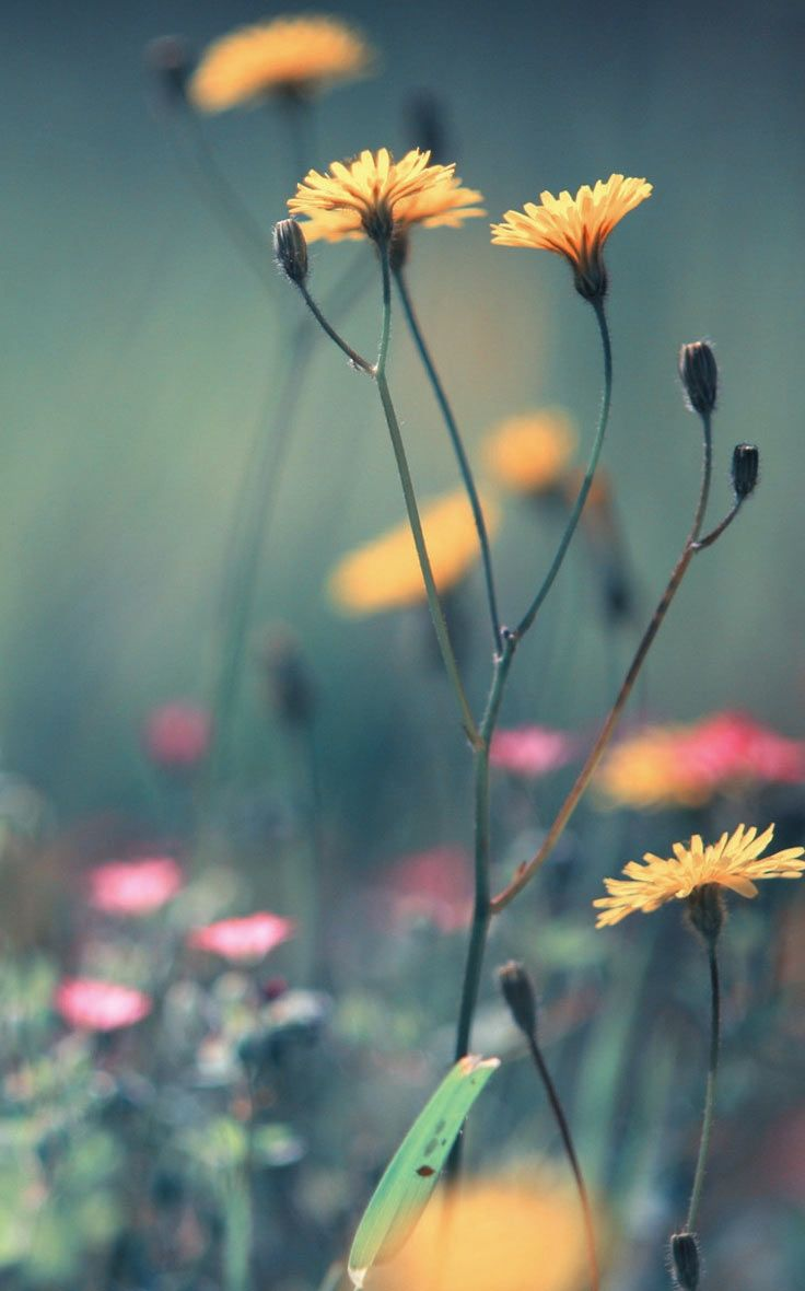 Cute Girl Wallpapers For Your Phone Pin By Brijesh Singh On Flower Dandelion Wallpaper