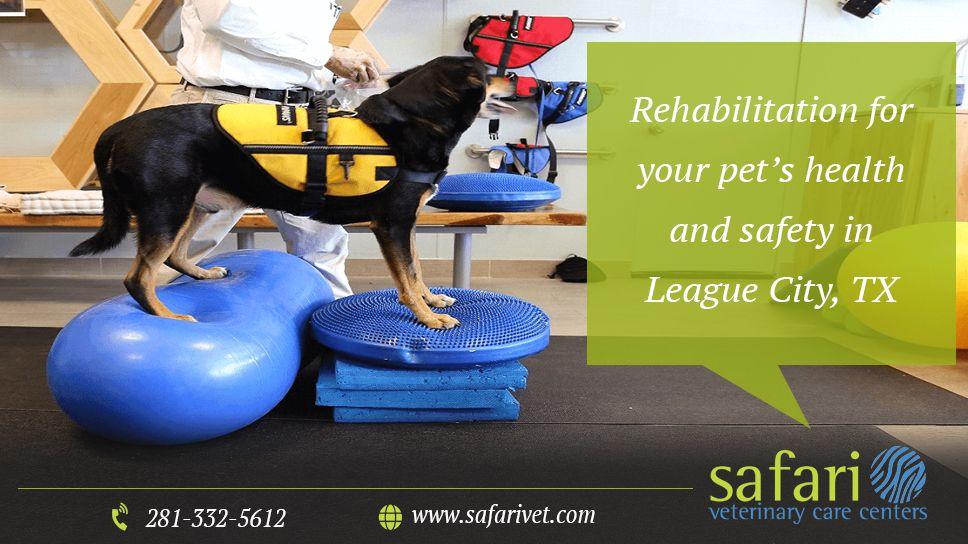 Rehabilitation Veterinary care, Pet health, Health, safety