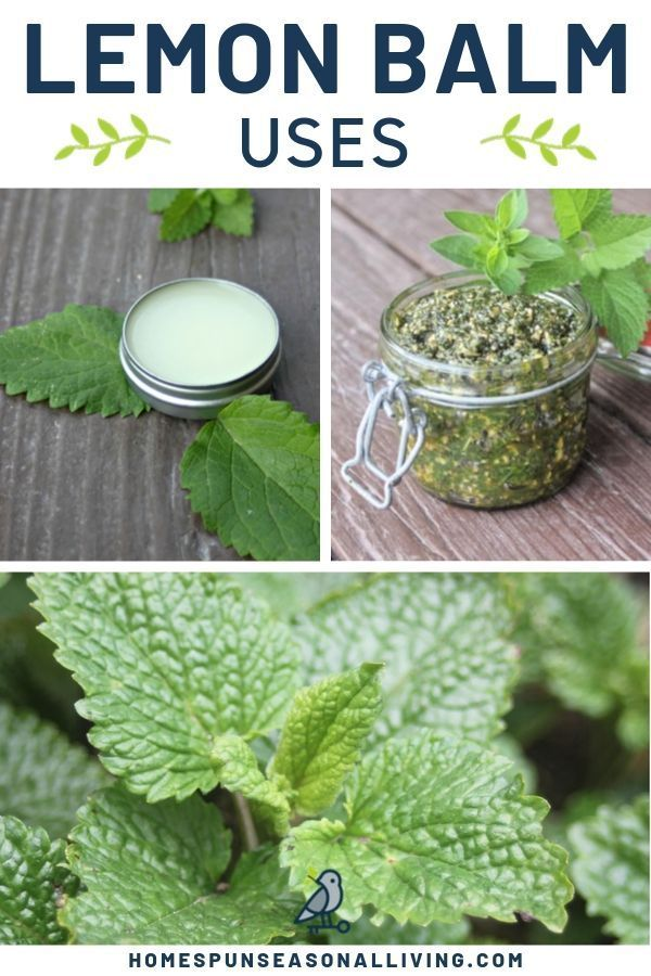 The lemon balm plant tends to grow voraciously in home gardens. Thankfully, lemon balm uses abound for food and medicine. Get tips on how to dry and make tea as well as find creative recipes on our blog. #herbalremedies #naturalremedies #diyideas