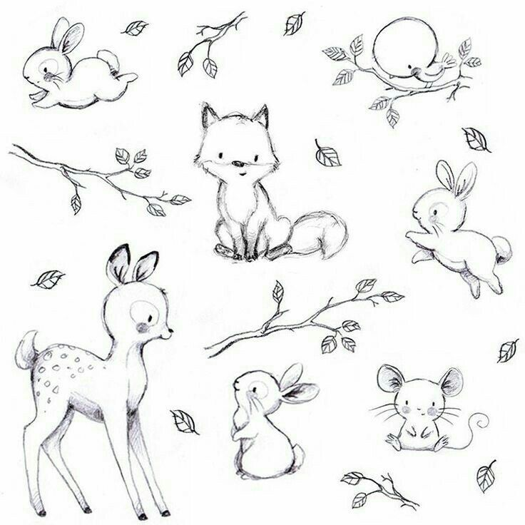Woodland Animals With Images Baby Animal Drawings Cute