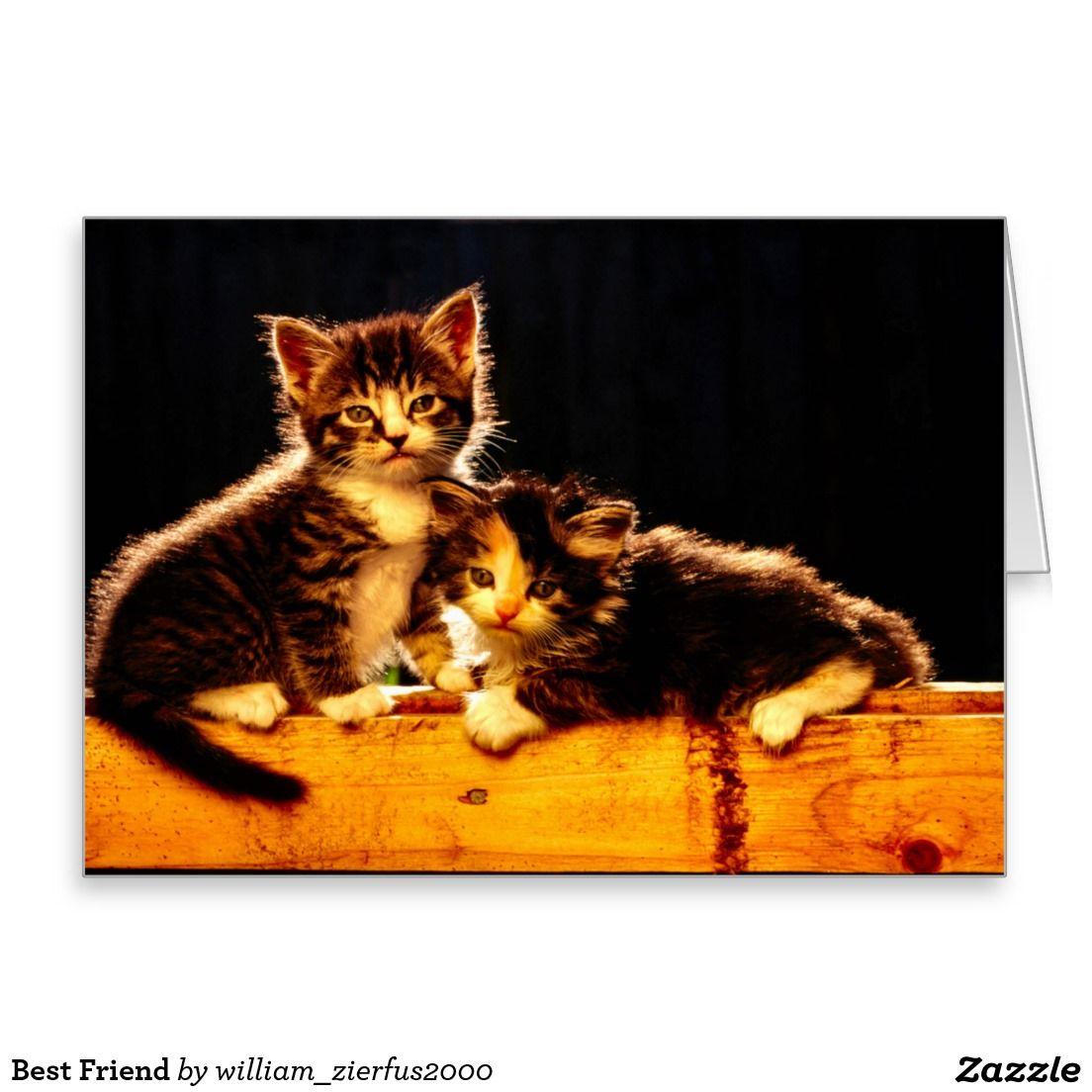 Best Friend Card Zazzle Com Newborn Kittens Kitten Wallpaper