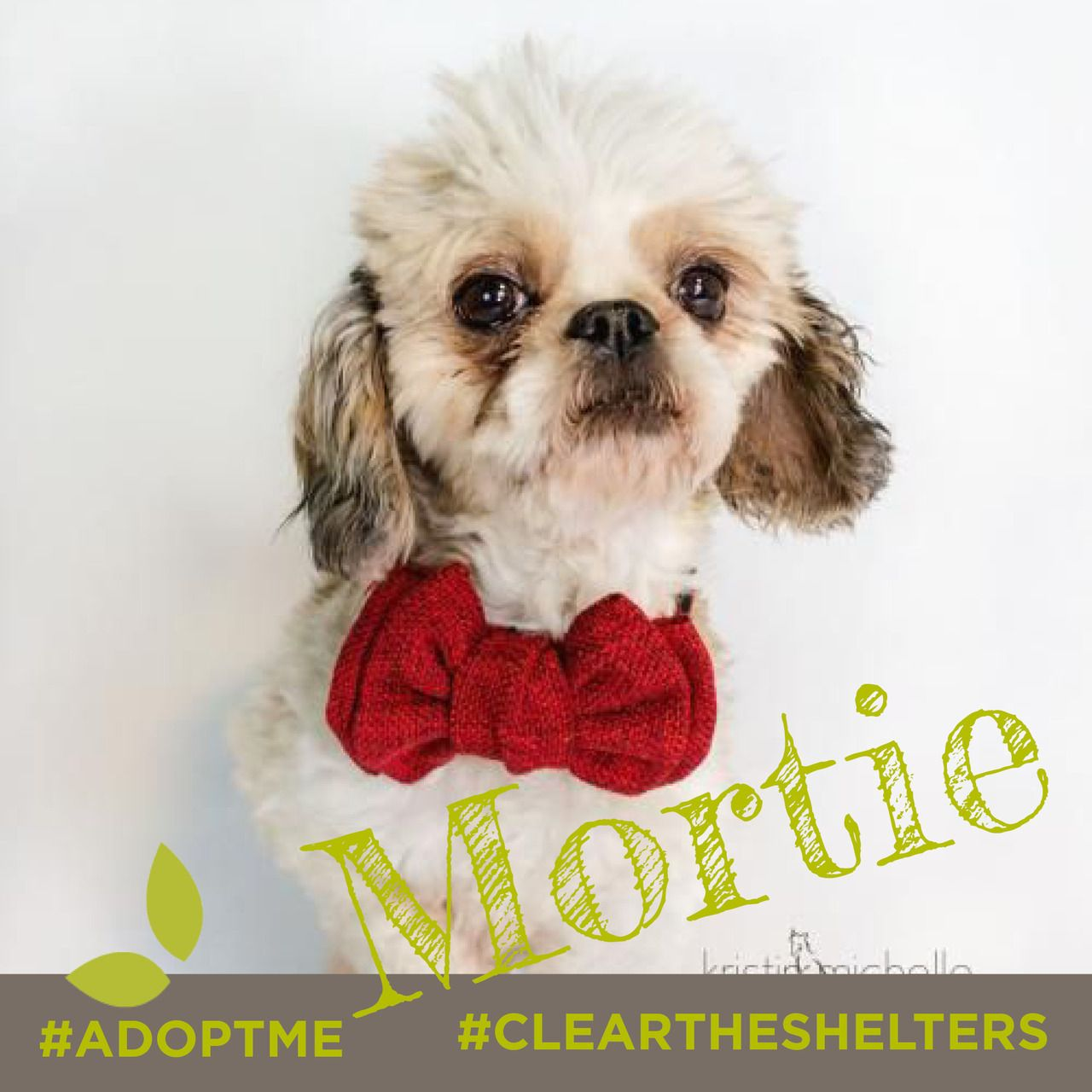 July 23rd is Clear the Shelters day. We're sharing adoptable animals now through the end of the month! Lets clean those shelters out of cuties like these!  Meet Mortie the 4 year old Shih Tzu Isn't he a sweetheart? He is currently being cared for by our friends at  Under Dog Rescue MN.