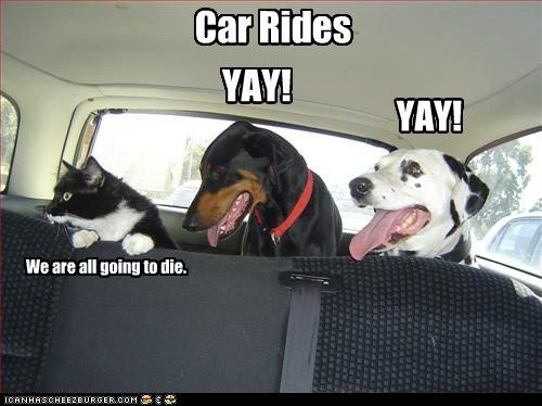 Pin By Lynne Snyder On Animals Funny Animals Funny Dogs Cute Funny Animals