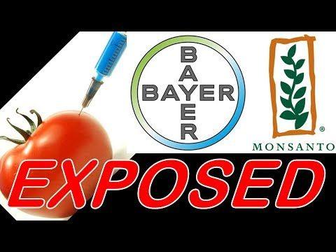 Monsanto Bayer Merger Gmos Exposed Youtube Monsanto