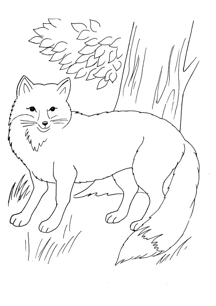 Ausmalbild Fuchs Einfach   Cartoon Bild