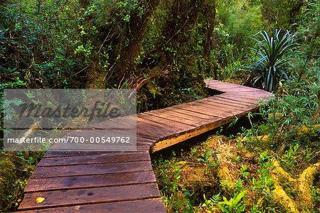 Boardwalk Through Forest, Chiloe National Park, Chiloe Island, Chile