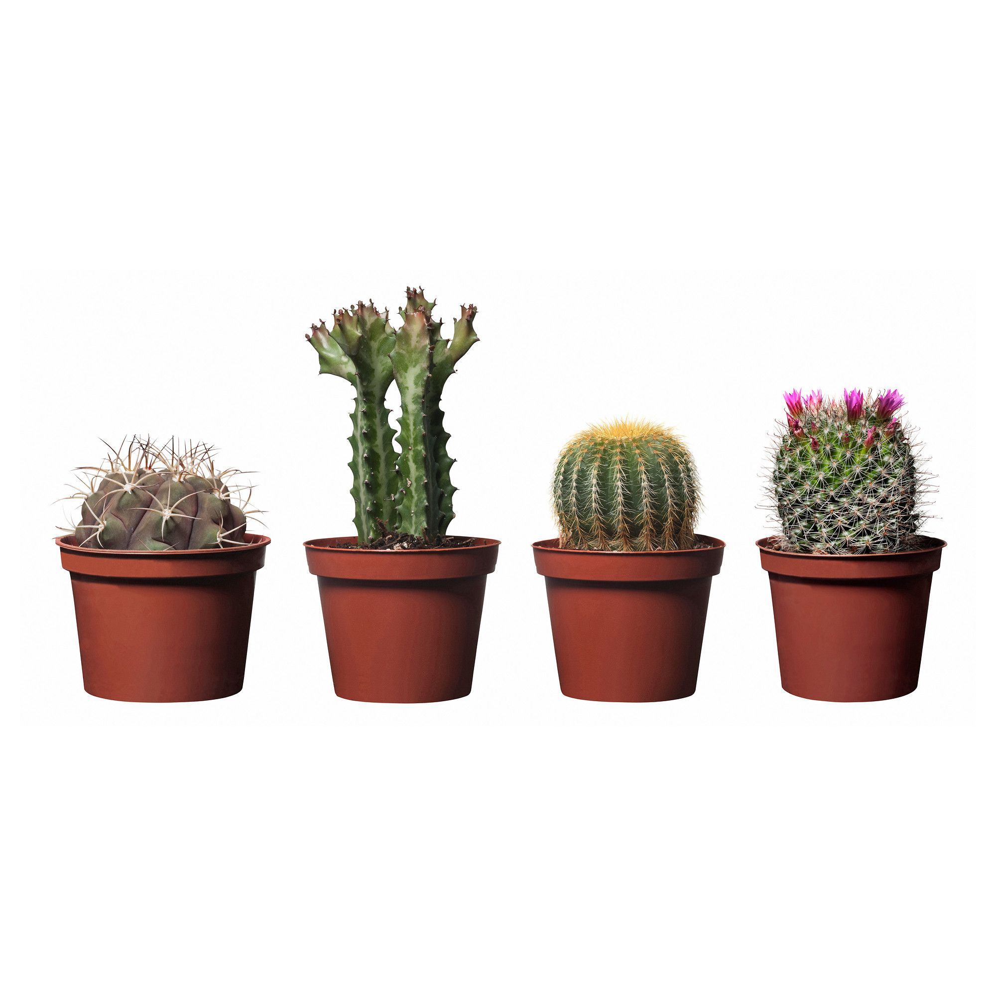 Cactaceae potted plant assorted species plants plants for Ikea plantes