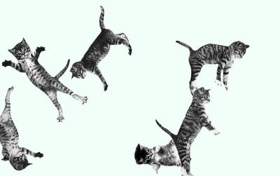 http://cat-bounce.com/#