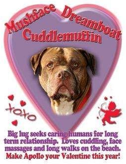 NEWJERSEY #URGENT ~ #Adopt me or one of my friends! in