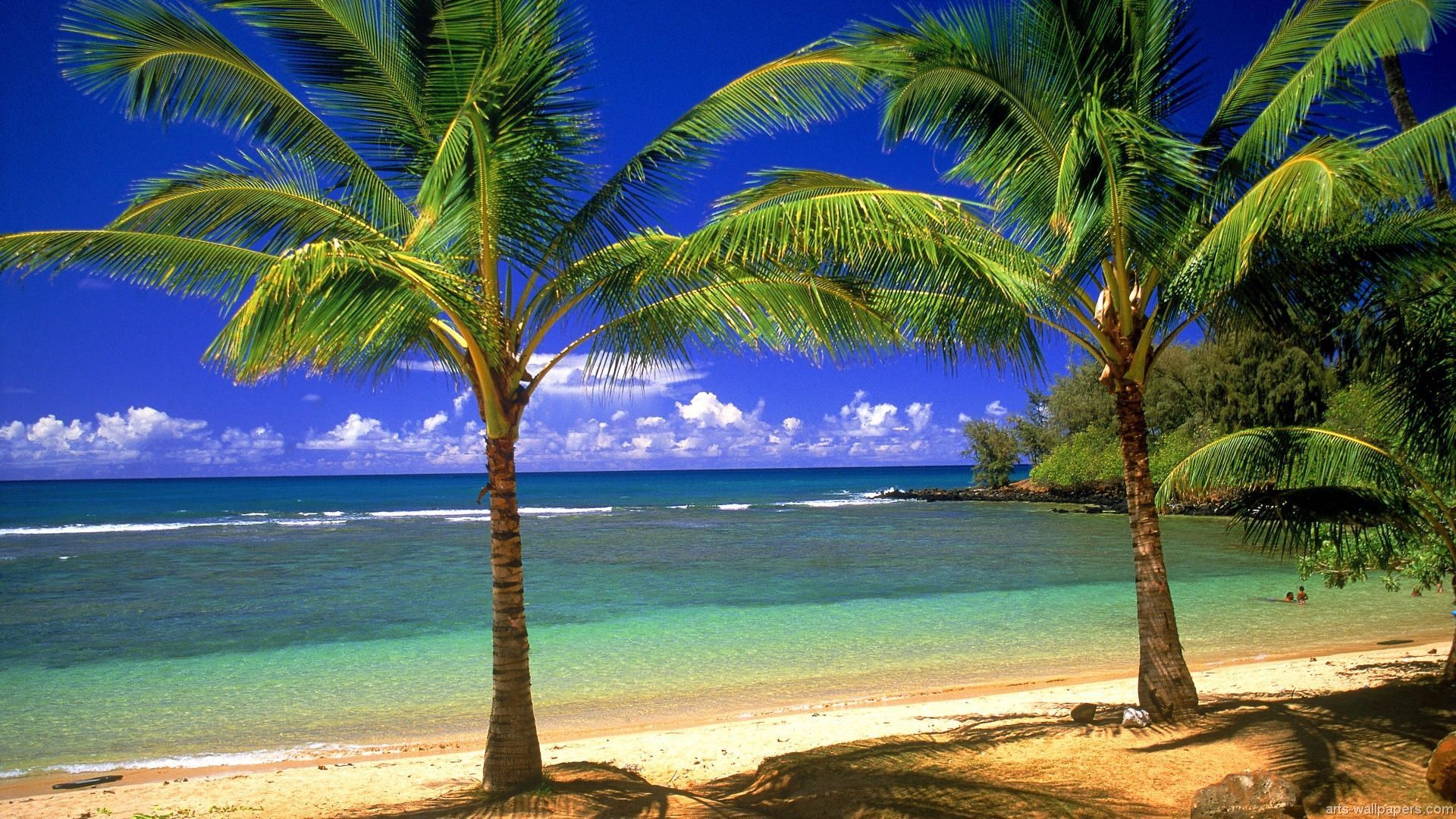 Tropical Beach Paradise Backgrounds: Beautiful Beaches.