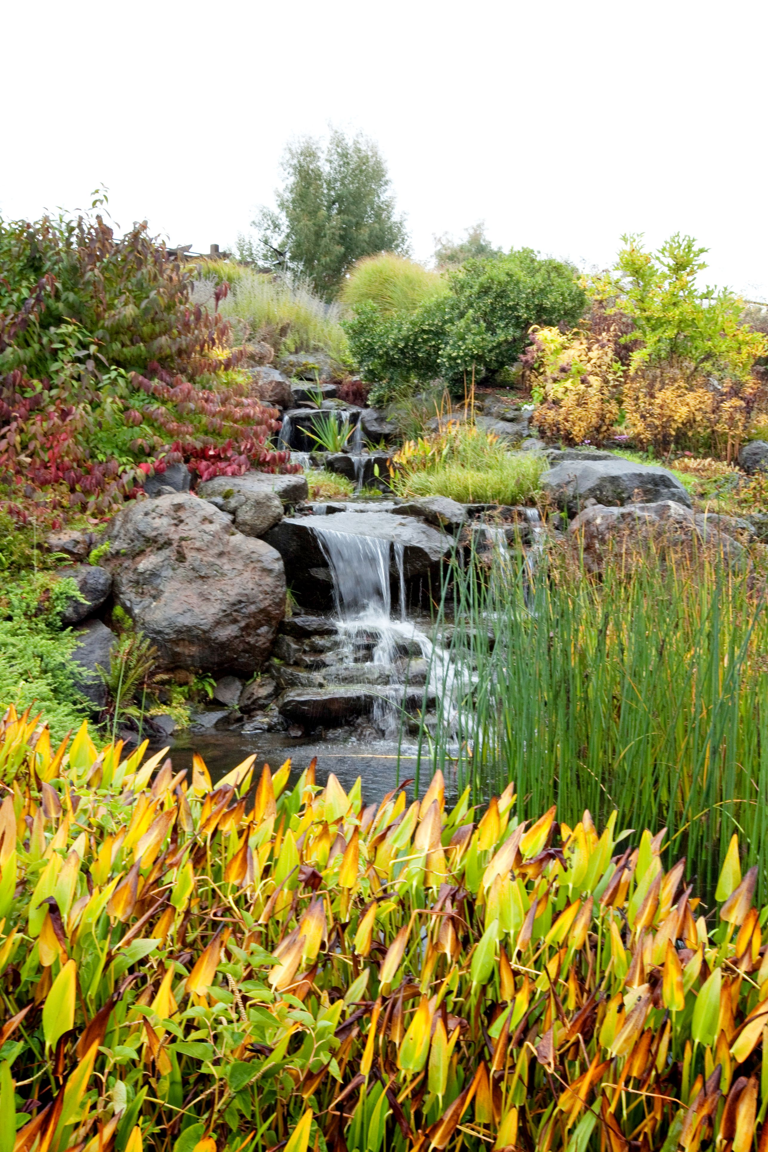 Isn T The Oregon Garden Stunning In The Fall Oregon Garden