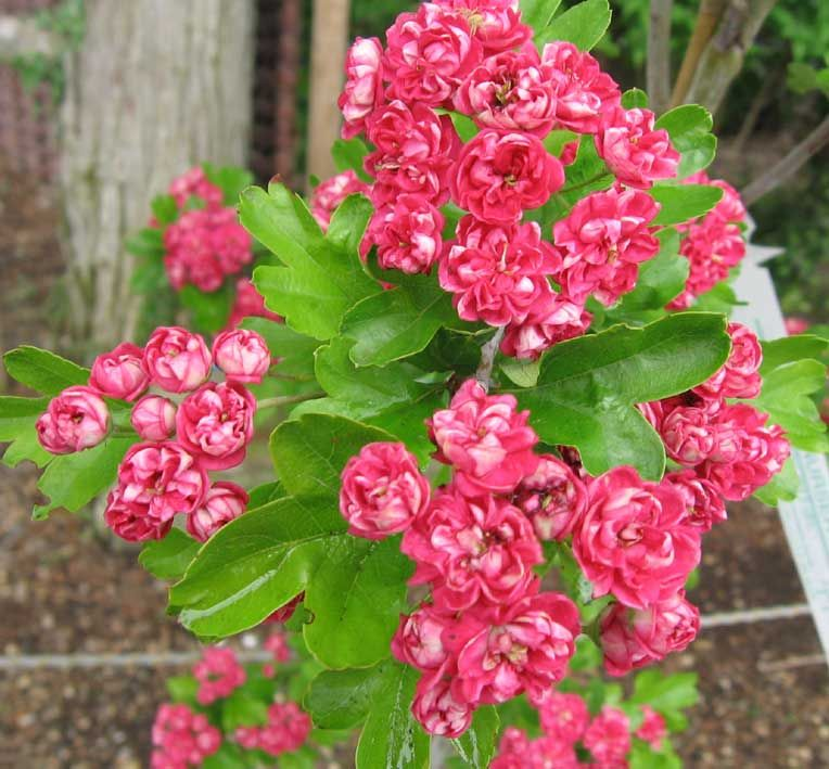 Houzz Spring Landscaping Trends Study: Cool Plants, Flowers, Nature Plants