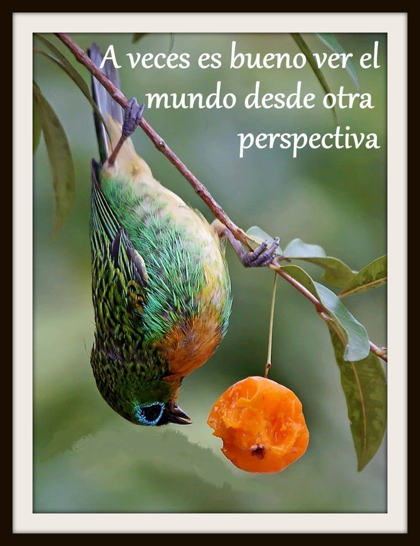 A Veces Es Bueno Ver El Mundo Desde Otra Perspectiva Citas Frases Candidman Fotos De Aves Aves De Compania Aves