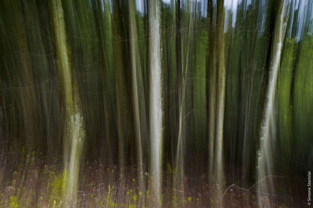 www.pixcube.it , WS Parco Nazionale Foreste Casentinesi, con S.Stanislai
