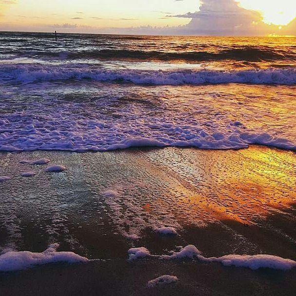 Englewood Florida.com  @msrabbit