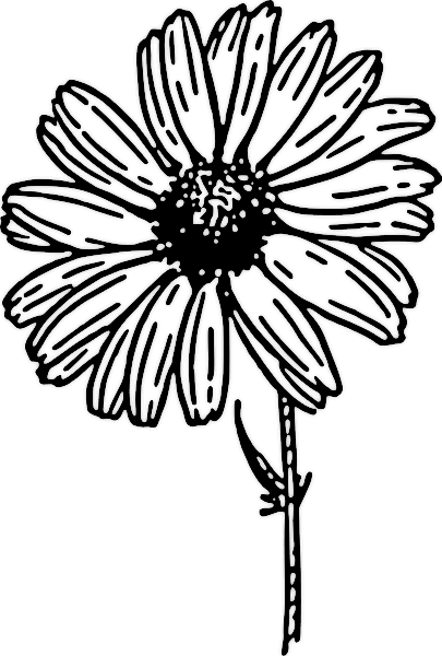 Flower black and white daisy. Free clipart public domain