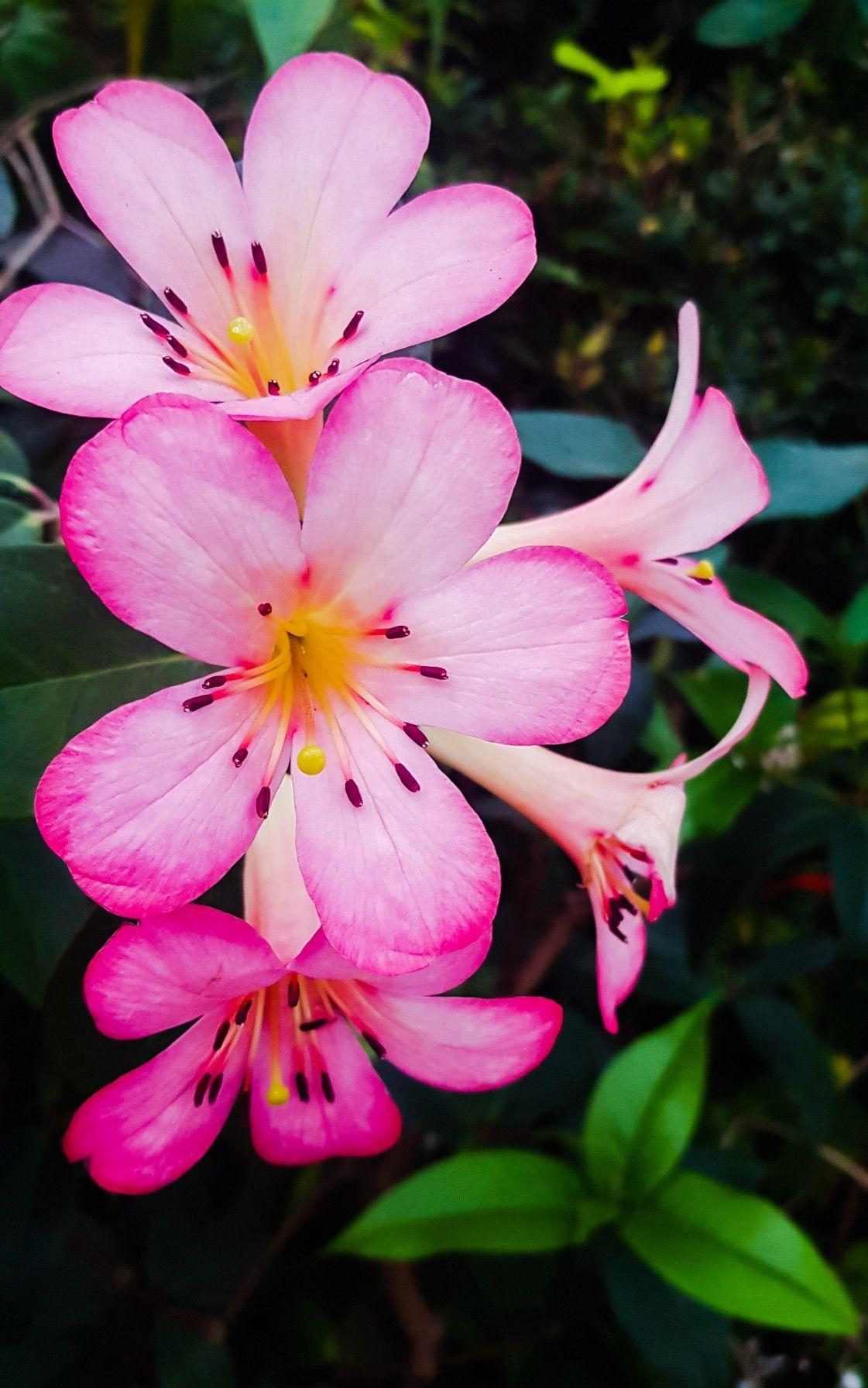 Beautiful Unknown Flower Amature Photography Flowers Beautiful